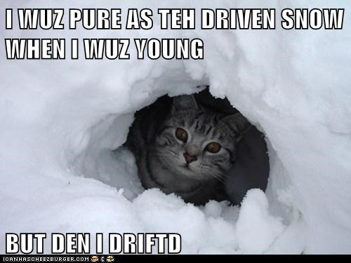 cat snow funny - 7027246336