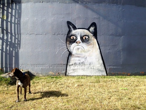 Street Art,graffiti,hacked irl,Grumpy Cat