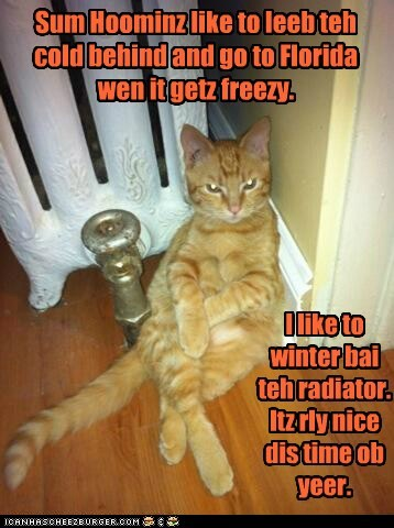 cat Heat weather relax funny - 7027958016