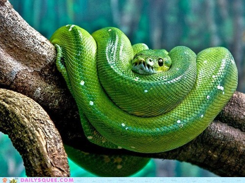 green creepicute snakes squee