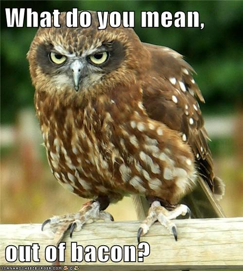 what do you mean,owls,angry,bacon