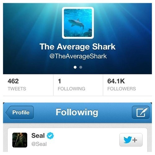 twitter,well played,seal,swim,shark