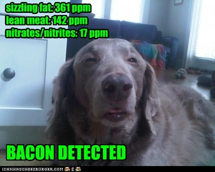 dogs smelling noms what breed bacon - 7029461504