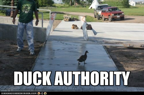 authority puns ducks rebellious tracks cement - 7029494272