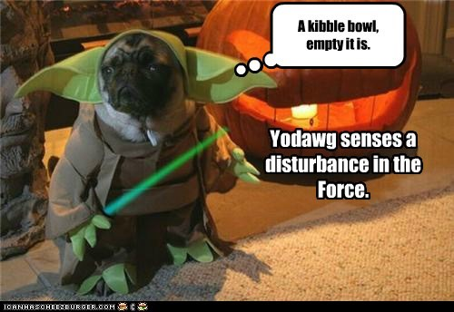 Yodawg senses a disturbance in the Force. A kibble bowl, empty it is.
