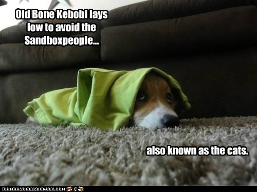 dogs,star wars,obiwan kenobi,Cats,corgis