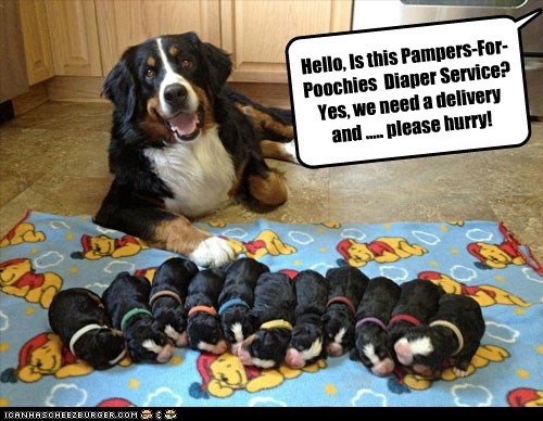 Hello, Is this Pampers-For- Poochies Diaper Service? Yes, we need a delivery and ..... please hurry!
