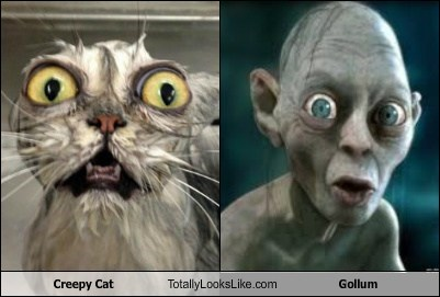 cat wet Lord of the Rings gollum Movie TLL bath