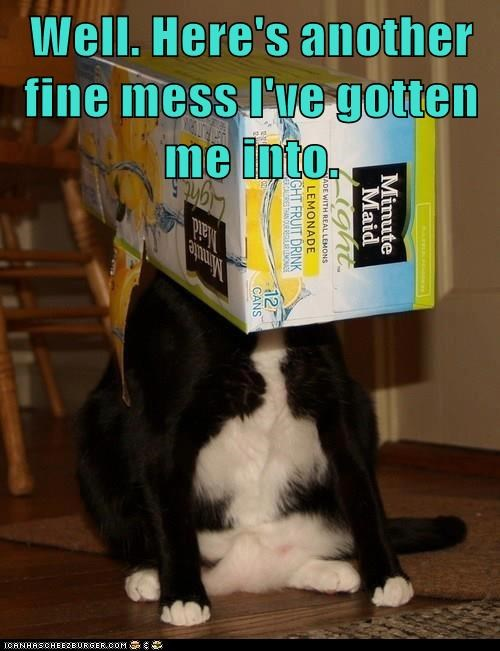 cat box mess funny - 7029957888