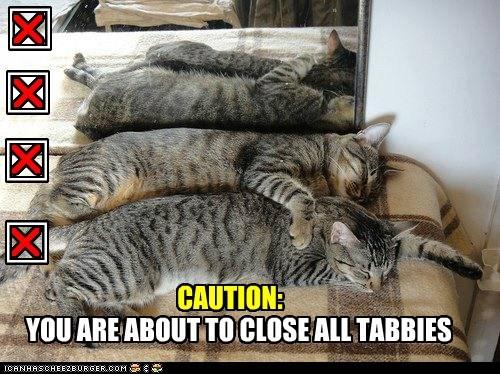 tabby tabs cat internet funny - 7029989376