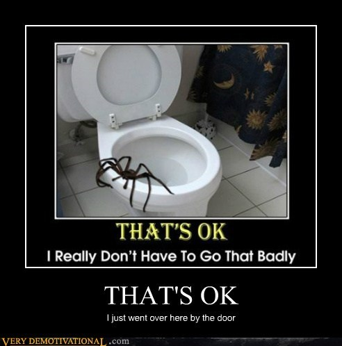 horrible spider toilet