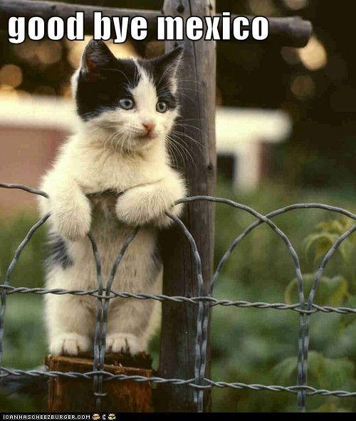 cat kitten kitty funny - 7030289408
