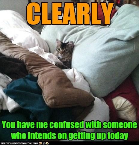 cat bed funny sleep - 7030336256