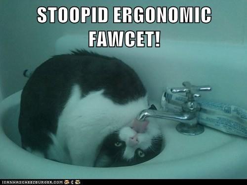 cat,water,faucet,funny