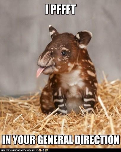 tapirs raspberry monty python reference pfft - 7030632192