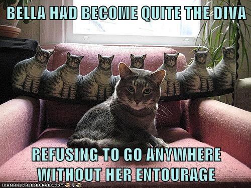 cat diva famous funny - 7030768640