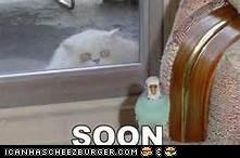Cheezburger Image 7030901760