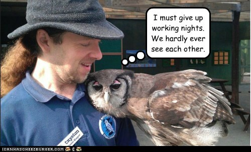 working,owls,hugs,dating