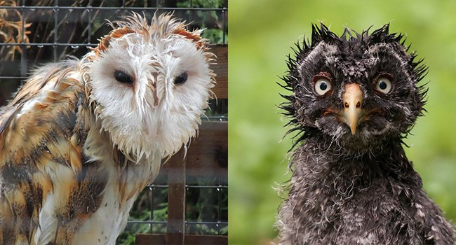 wet photos owls funny photos funny - 7031301