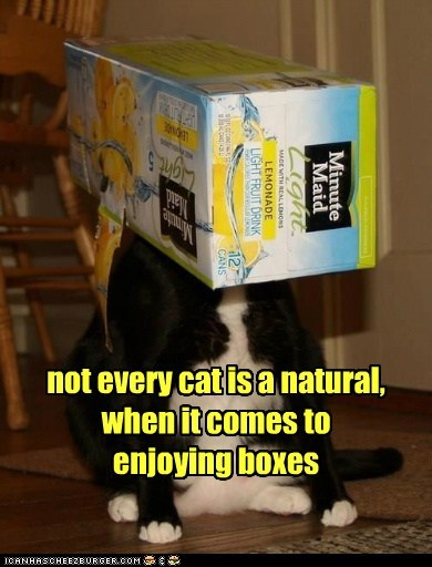 not every cat is a natural,  when it comes to enjoying boxes