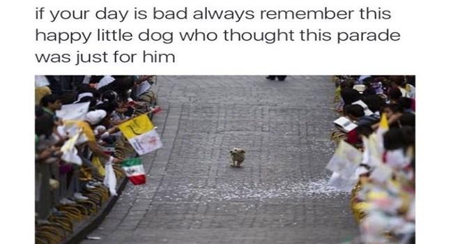 funny mems Memes animal memes animals - 7031813