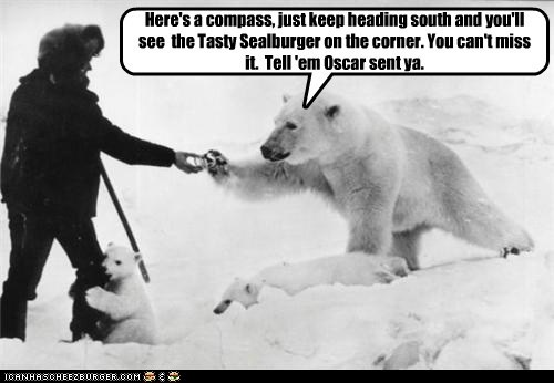 gps man polar bear directions cubs compass