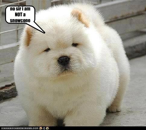 no sir i am NOT a snowcone