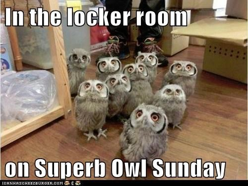 super bowl puns owls football - 7032251648