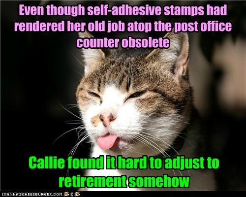 old cat retirement funny