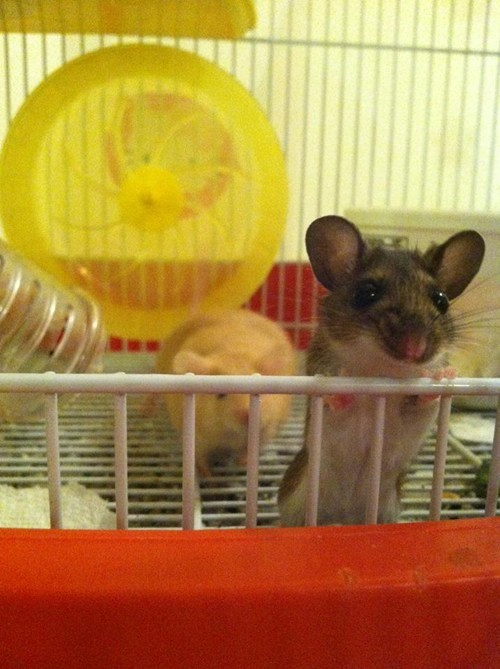 reader squee pets mice squee mouse - 7032378624