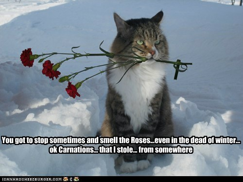 cat snow flowers funny - 7032438272