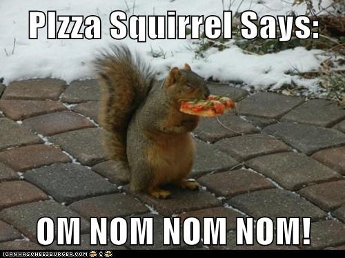 pizza,om nom nom,squirrels,eating