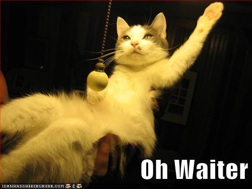 cat waiter restaurant service funny - 7032468736