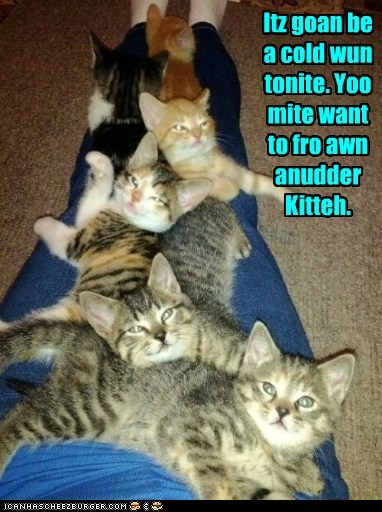 Itz goan be a cold wun tonite. Yoo mite want to fro awn anudder Kitteh.