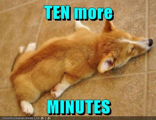 dogs,floor,snooze,sleeping,corgis