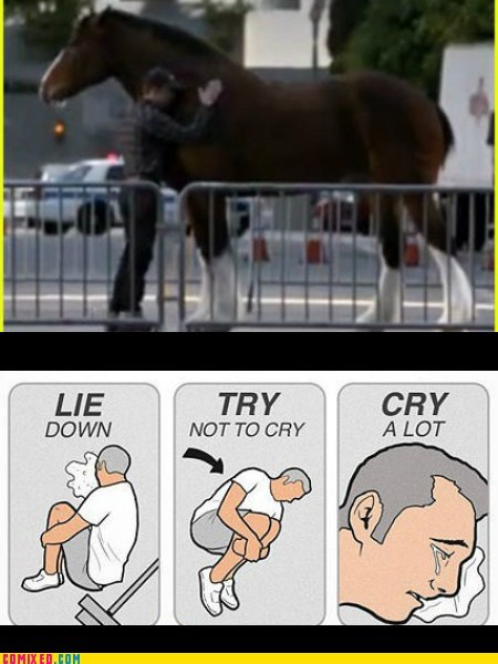 try not to cry budweiser Super Bowl Ad horse - 7033130752