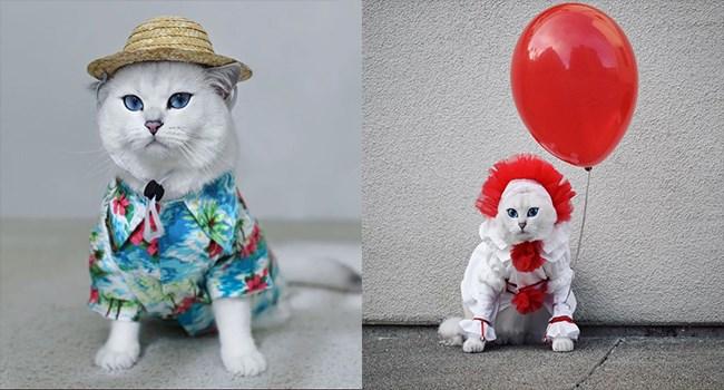 costume halloween costumes halloween Cats - 7033349