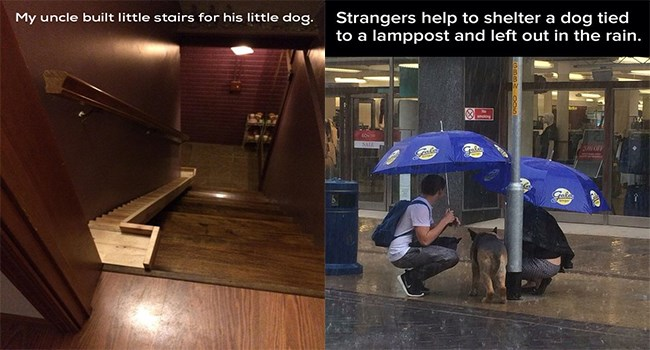 wholesome dogs faith in humanity Memes - 7033861