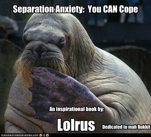 bukkit,lolrus,self help,separation,walruses