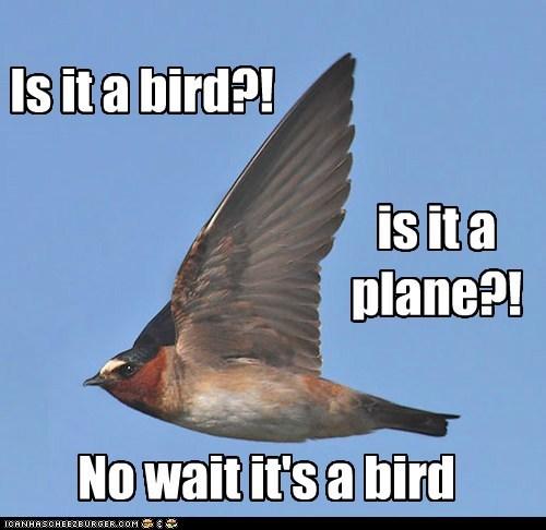 birds plane superman flying - 7033956608