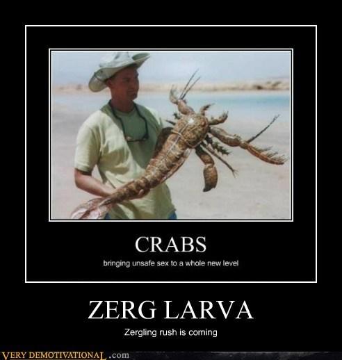 larva star craft Zerg - 7034406656
