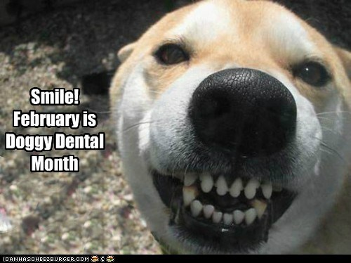 Smile! February is Doggy Dental Month