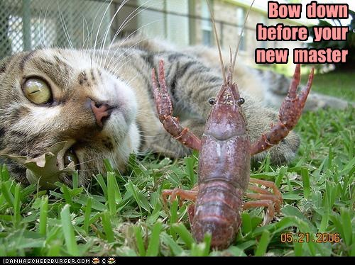 master,crayfish,Cats,bow down