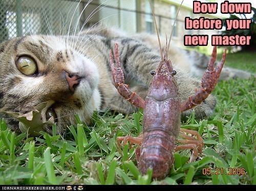 master crayfish Cats bow down - 7034785024