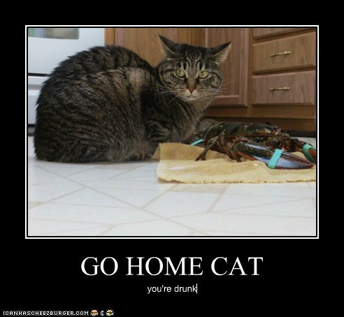 GO HOME CAT