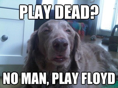 play dead,drugs,marijuana,stoned dog,floyd,after 12,g rated