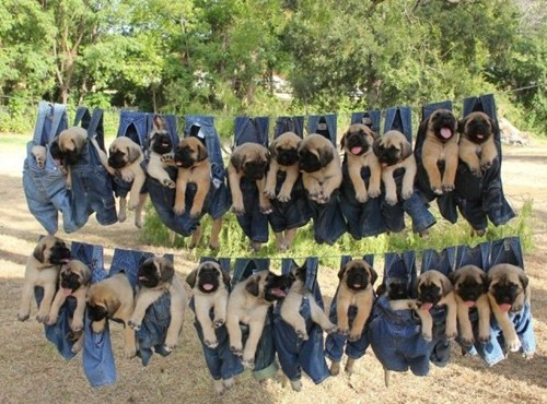 clothes line dogs pants - 7035212544