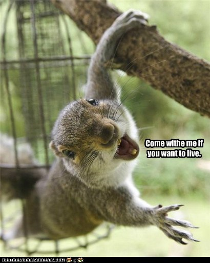 come with me,quotes,squirrels,The Terminator