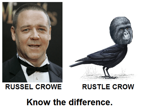 rustled my jimmies,russel crowe,celeb