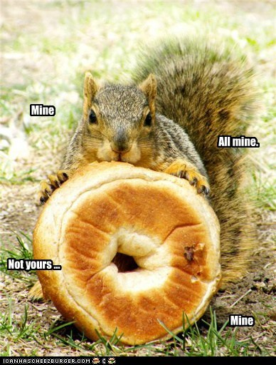 mine,squirrels,greedy,eating,bagels